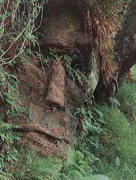 volto nel bosco