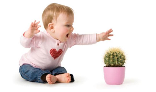 insensibilità al dolore - cactus