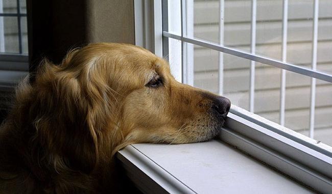 cane attende il padrone