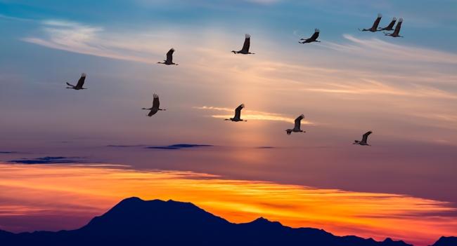 migratori: uccelli orientamento