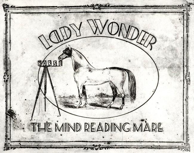 ladywonder