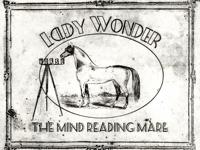 ladywonderNL